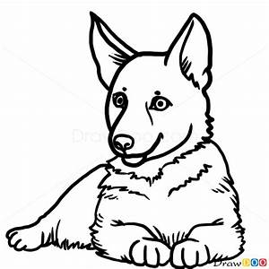 Drawn Puppy German Shepherd Pencil And In Color Drawn
