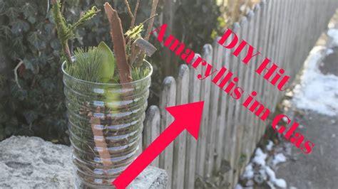 Amaryllis Im Glas Dekorieren by Pflanzenbilder Selber Machen Pflanzen Bilderrahmen Zum