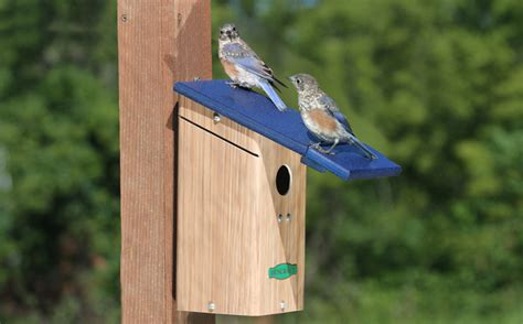 duncraft wild bird blog
