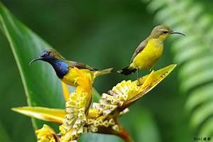 Olive Backed Su... Sunbird Quotes