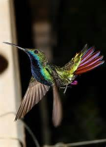 Beautiful Hummingbird Gardens