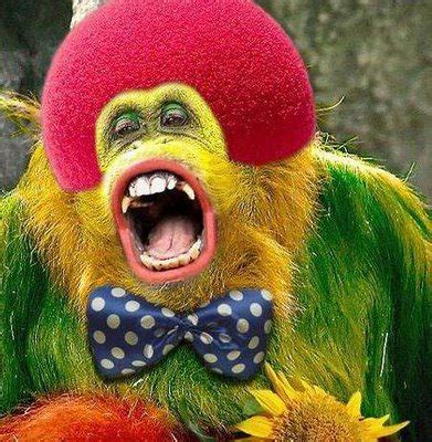 cute animal clown xcitefunnet