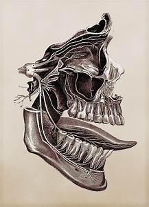 131 Best My Skull Anatomy Images On Pinterest