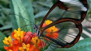 Beautiful Butterflies | www.pixshark.com - Images ...