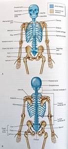 Axial And Appendicular Skeleton      Ittcs Files