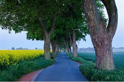 Tree Lined Road Flower Wallpapers