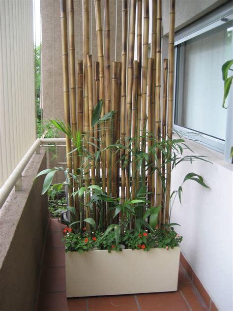 Sichtschutz Pflanzen Im Kübel by Balkon Sichtschutz Mit Pflanzen Natur Pur Auf Dem Balkon