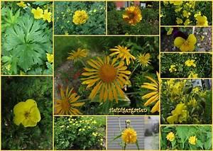 Was Blüht Jetzt Im Garten : feng shui gelbes beet bl ht auf ~ Lizthompson.info Haus und Dekorationen