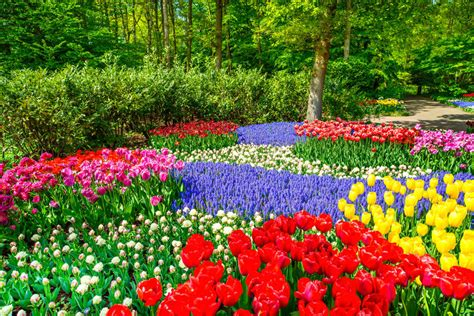 tulip flower garden free stock red tulip garden in spring background or pattern stock image image 34637469