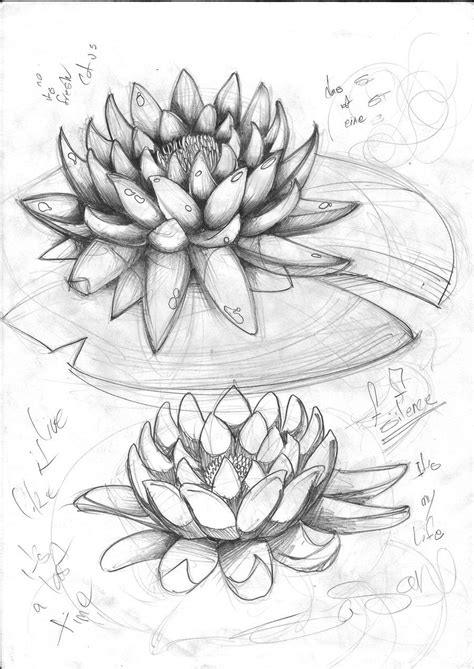 Lotus Flower Drawings for Tattoos | Lotus Tattoo Sketch