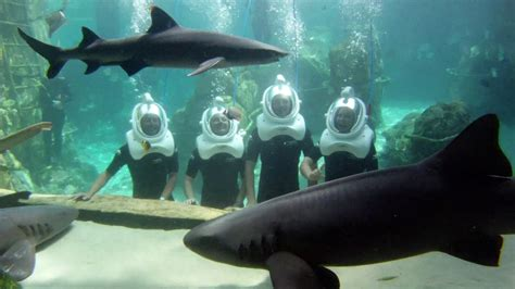 miami sea world aquarium discovery cove celebrates sweet sixteen