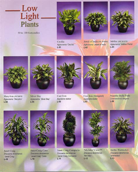 best small indoor plants low light 100 bathroom plants low light bathroom bathroom bathroom