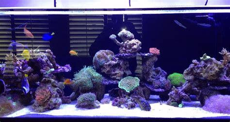 Large Fish Tanks - The Aquarium Setup, Filtration, and