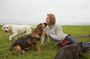 animal behavior certification programs With dog behaviorist