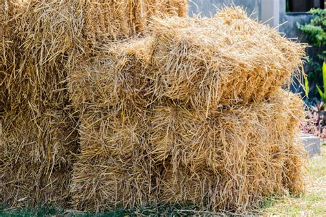 Where To Buy Straw Bales For Gardening by How To Build A Straw Bale Garden The Daily Gardener