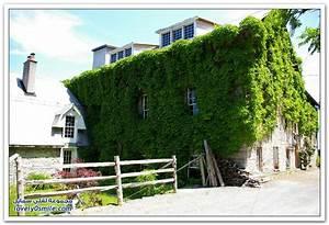 طباعة رسالة > منازل مُزينة بالأشجار