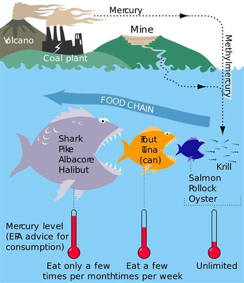 Mercury Fish Wikipedia