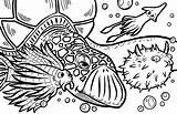 Calamari sketch template