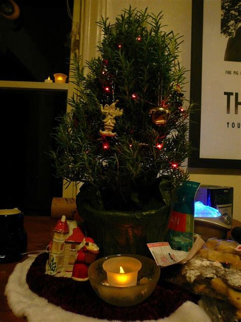 apartment size christmas tree learn about rosemary tree plants keeping a rosemary for