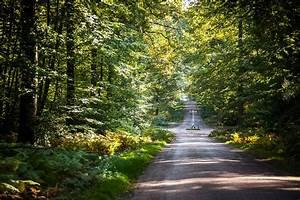 Jupilles  Forestland