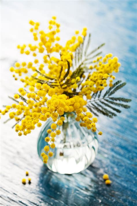 beautiful yellow flowers decorisme