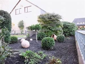Buchsbaum Kugel Schneiden : buchsbaum schneiden kugel buchsbaum schneiden baumschnitt ~ Lizthompson.info Haus und Dekorationen