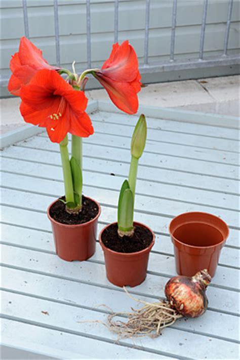 bulbs for flowering rhs gardening