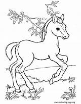 Coloring Baby Pages Horses Horse Popular sketch template