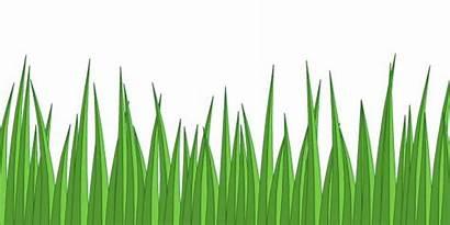 Grass Cartoon Drawing Simple Fake Grasses