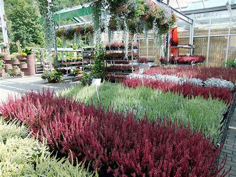 Lang Blühende Winterharte Pflanzen winterharte pflanzen g 228 rtnerei lang in schwarzenberg