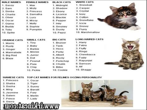 kitten names good kitten names male cats kittens