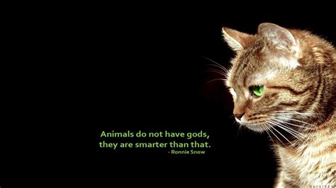 Animal Wallpapers With Quotes - text cats animals quotes simple background black