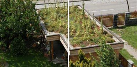 Carportbegrünung  Gartengestaltung Korneuburg