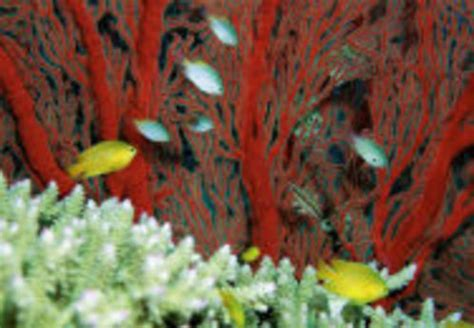 faire baisser nitrate aquarium comment faire diminuer le taux de nitrates dans un aquarium r 233 cifale