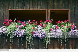 balkon blumen stock fotos und bilder getty images With katzennetz balkon mit garden boxes