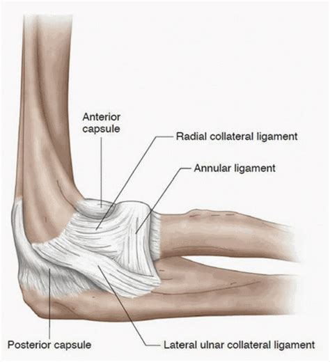 Best Ulnar Collateral Ligament Ideas And Images On Bing Find