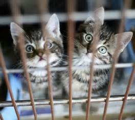 rescue cats newbridge cat rescue re homing centre home
