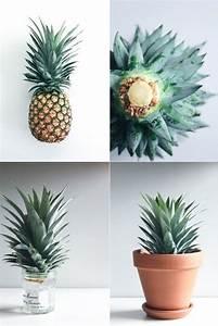 Plant D Ananas : diy project grow your own pineapple plant style amazing garden pineapple ~ Melissatoandfro.com Idées de Décoration