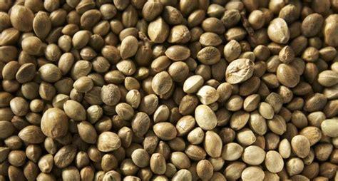 semi  canapa proprieta benefici  valori nutrizionali