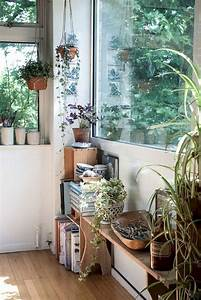 Inspirational, Indoor, Plants, Collection, 4, Inspirational, Indoor, Plants, Collection, 4, Design, Ideas