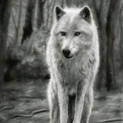 Realistic Wolf Drawings