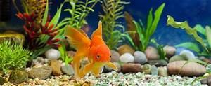 Fische Für Anfänger : aquarium f r anf nger die besten tipps ~ Orissabook.com Haus und Dekorationen