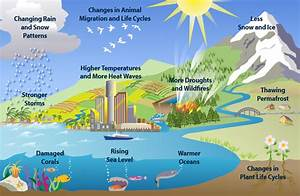 What Cause Global Warming Effect