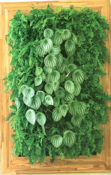 How To Plant Vertical Garden by 10 Best Vertical Garden Plants With Care Tips Gardenoholic