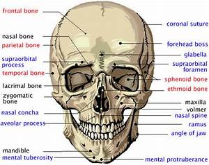 Maxillofacial Trauma-Lecture note with Powerpoint ...