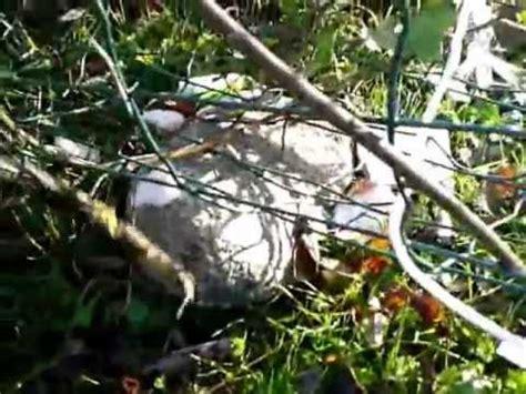 cage pi 232 ge 224 tr 233 buchet attrape oiseaux vivants sans blesser a vendre funnycat tv