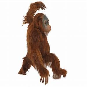 R-016 Orangutan Baby with real hair PROTHEME GLOBAL