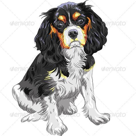 dog cavalier king charles spaniel breed  kavalenkava