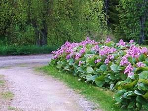 Carex Hachijoensis Evergold Pflege : 83 besten vorgarten bilder auf pinterest landschaftsbau ~ Lizthompson.info Haus und Dekorationen