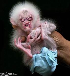 Scary Baby Monkey